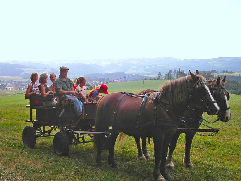 Ponyreiten Schwarzwald Bauernhof