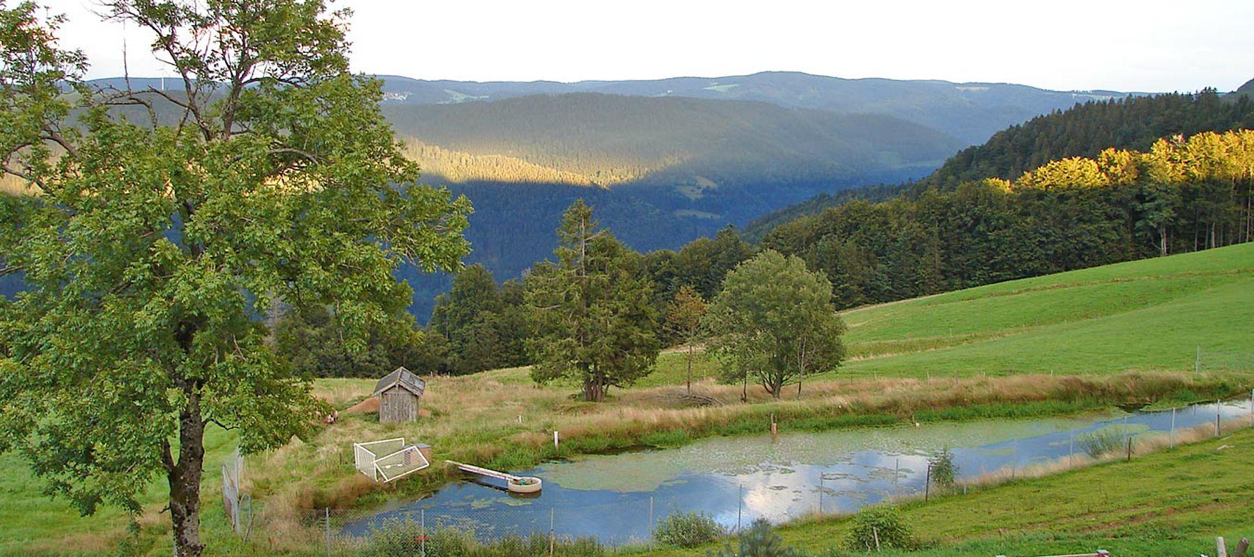 Urlaub Idylle Schwarzwald