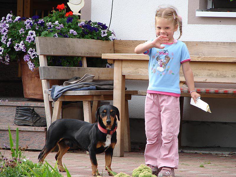 Hund Tiere Bauernhof Althäuslehof