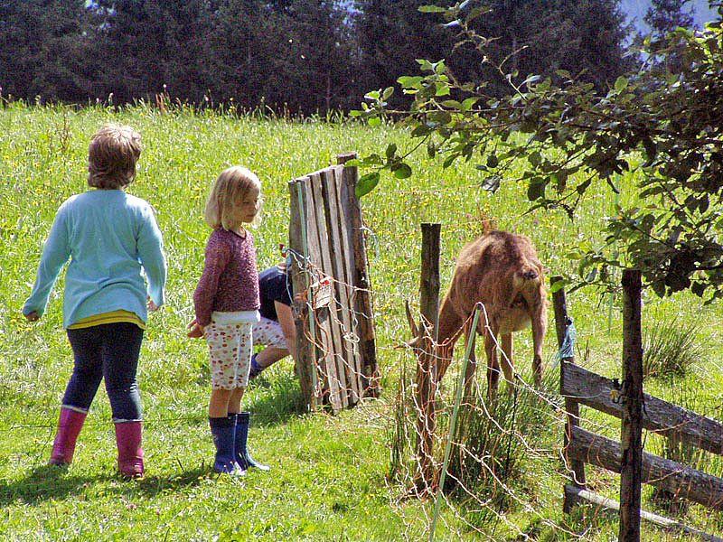 Tiere Bauernhof Schwarzwald