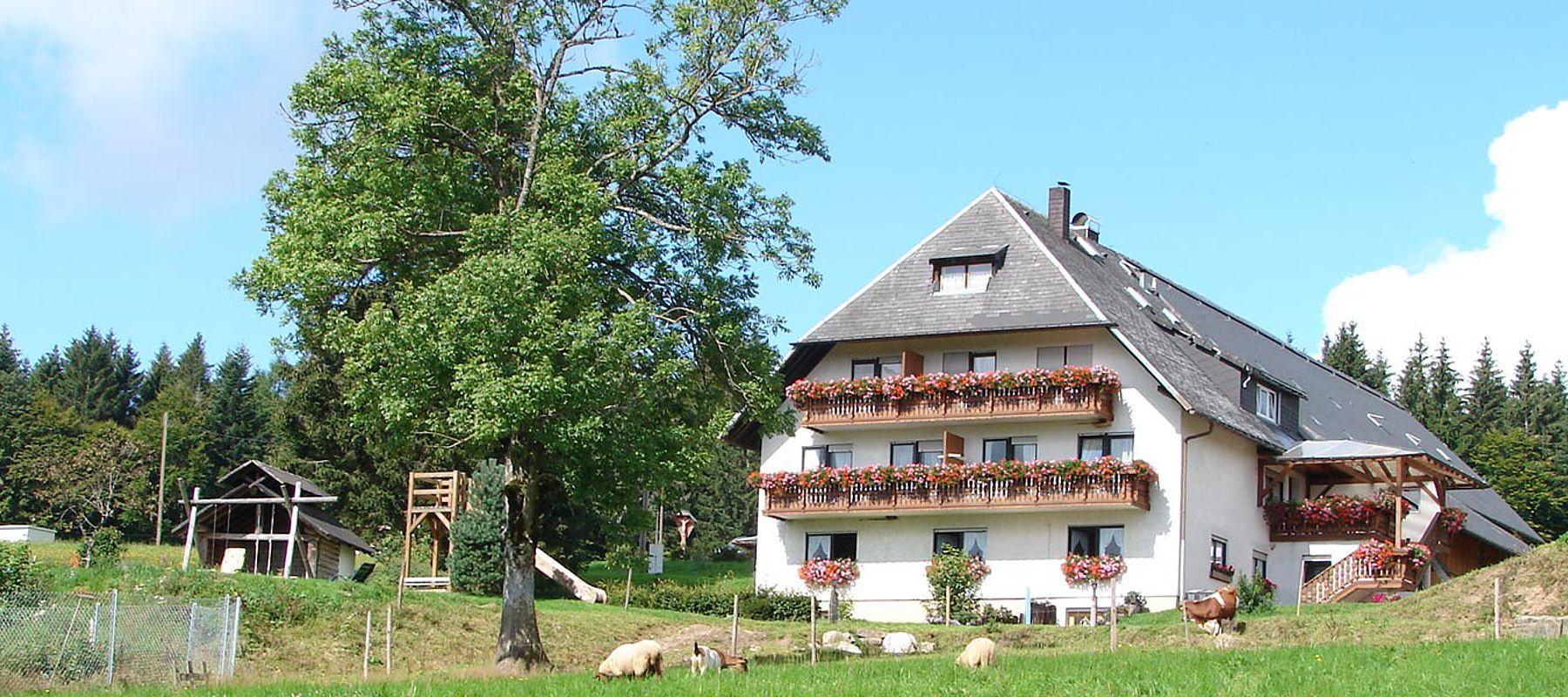 Sommer Bauernhof Schwarzwald