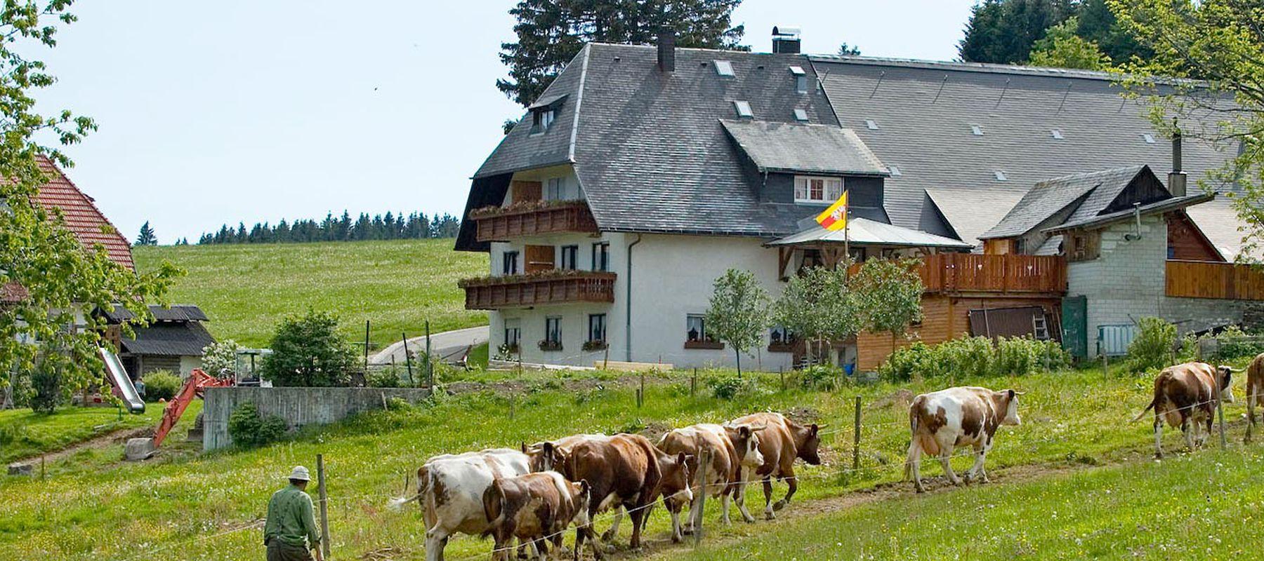 Bauernhof Milchwirtschaft Schwarzwald